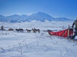 Alaska Dogsled